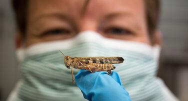 Global Locust Initiative